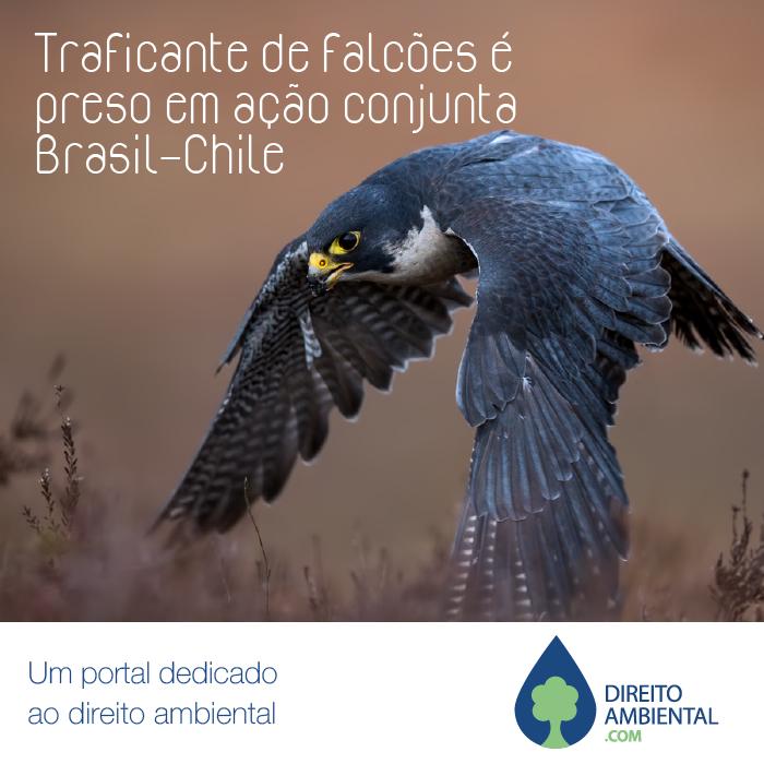 post_falcão