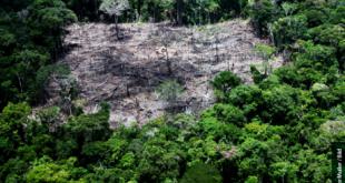 direito-ambiental-codigo-florestal-post_desmatamento