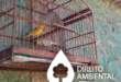dano-ambiental-thumb_canario