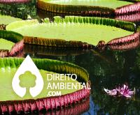 Direito-Ambiental-thumb-20
